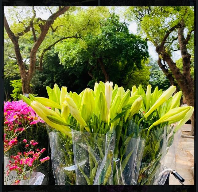 Phố phường Hà Nội lãng mạn với sắc trắng hoa Loa kèn ảnh 5
