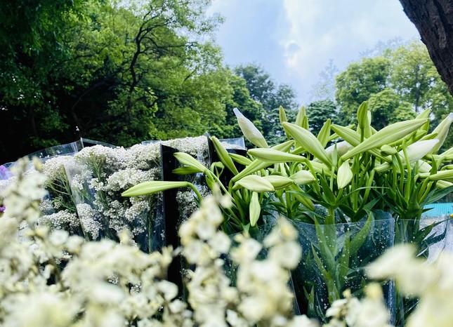 Phố phường Hà Nội lãng mạn với sắc trắng hoa Loa kèn ảnh 8