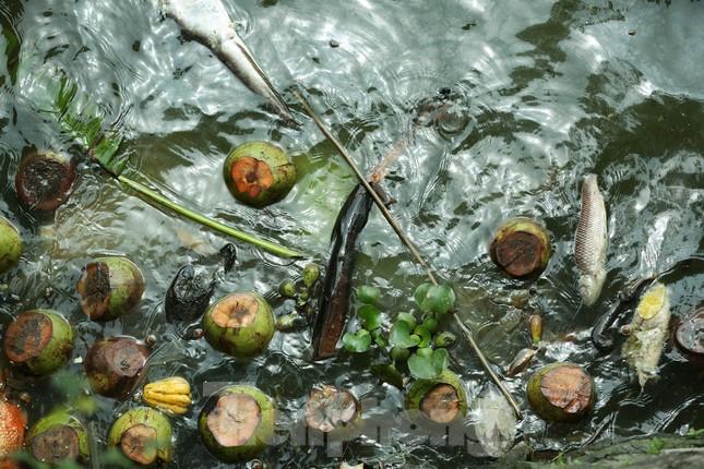 Nước hồ Tây ô nhiễm, nhiều thông số vượt ngưỡng cho phép ảnh 2