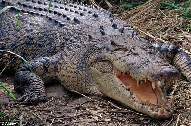 Bộ tộc bé trai phải chịu đau đớn chết người khi bị rạch da để giống vảy cá sấu ảnh 7