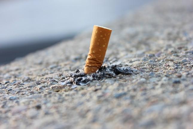 Tái chế đầu lọc thuốc lá thành gạch: Từ lý thuyết đến thực tiễn ảnh 2