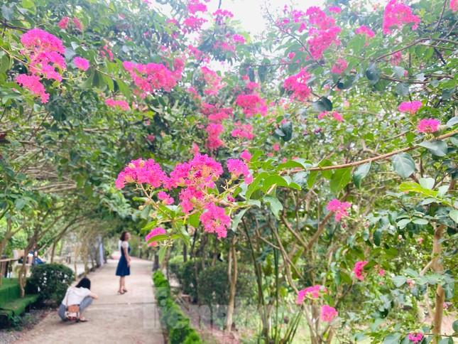 Cuối tuần check in con đường hoa tường vy đẹp như mơ giữa lòng Hà Nội ảnh 4