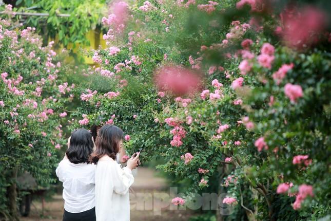 Cuối tuần check in con đường hoa tường vy đẹp như mơ giữa lòng Hà Nội ảnh 3