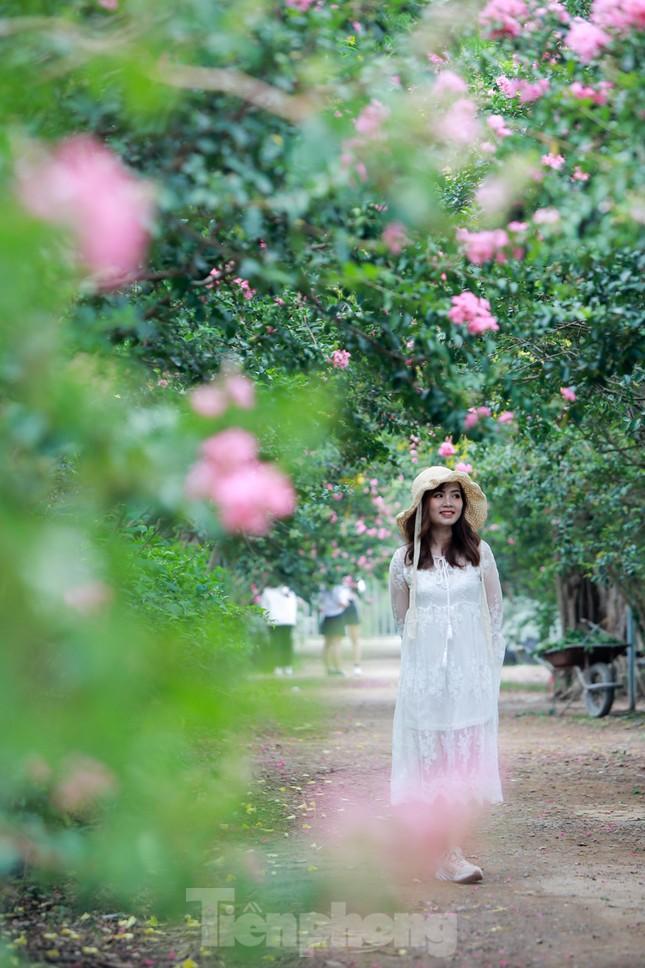 Cuối tuần check in con đường hoa tường vy đẹp như mơ giữa lòng Hà Nội ảnh 2
