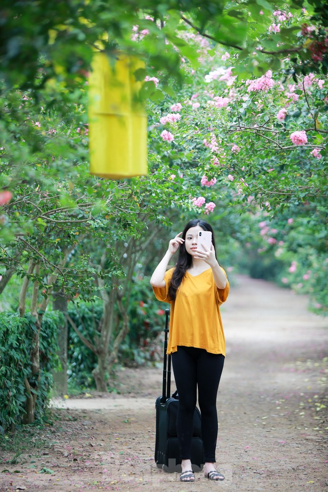 Cuối tuần check in con đường hoa tường vy đẹp như mơ giữa lòng Hà Nội ảnh 6