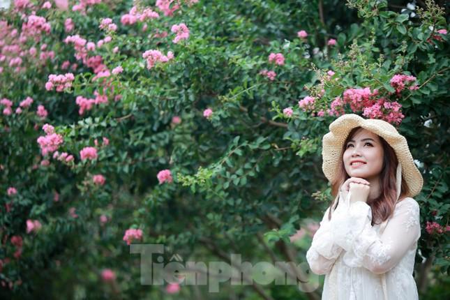 Cuối tuần check in con đường hoa tường vy đẹp như mơ giữa lòng Hà Nội ảnh 7