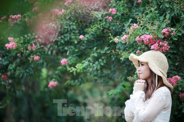 Cuối tuần check in con đường hoa tường vy đẹp như mơ giữa lòng Hà Nội ảnh 1