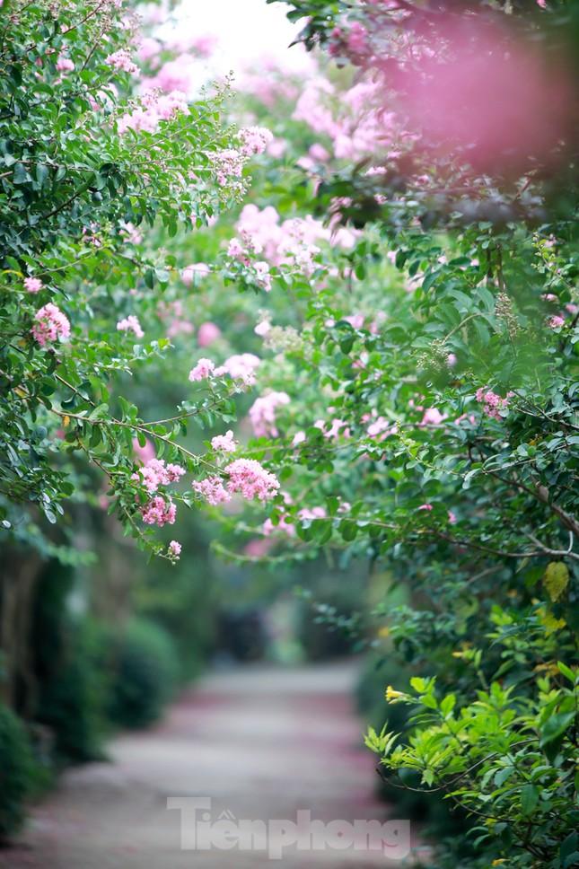 Cuối tuần check in con đường hoa tường vy đẹp như mơ giữa lòng Hà Nội ảnh 8