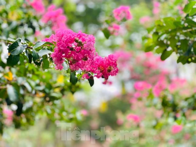 Cuối tuần check in con đường hoa tường vy đẹp như mơ giữa lòng Hà Nội ảnh 9