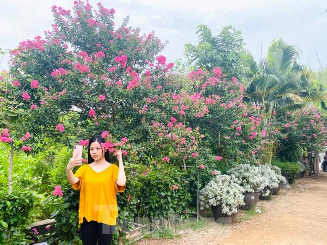 Cuối tuần check in con đường hoa tường vy đẹp như mơ giữa lòng Hà Nội ảnh 12