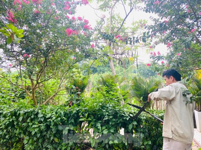 Cuối tuần check in con đường hoa tường vy đẹp như mơ giữa lòng Hà Nội ảnh 10