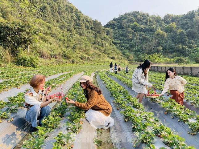 Hết mùa hoa lê, giới trẻ lại đổ xô checkin vườn dâu tây ở Mộc Châu ảnh 13
