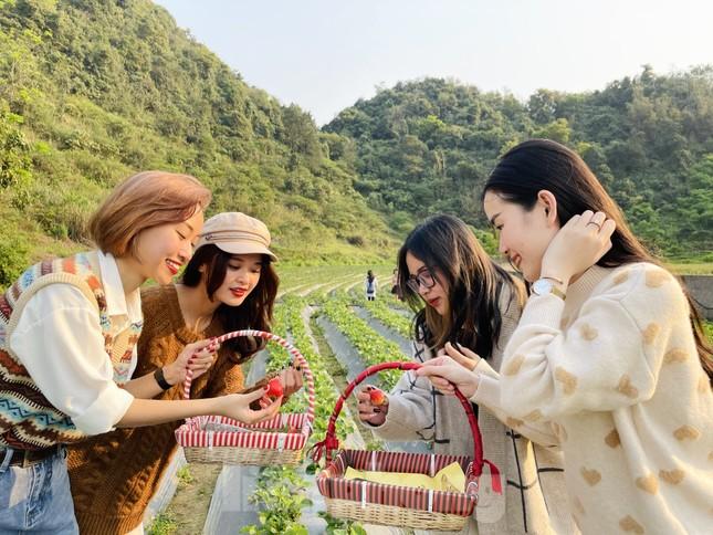 Hết mùa hoa lê, giới trẻ lại đổ xô checkin vườn dâu tây ở Mộc Châu ảnh 8