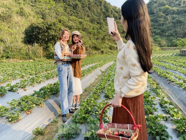 Hết mùa hoa lê, giới trẻ lại đổ xô checkin vườn dâu tây ở Mộc Châu ảnh 5