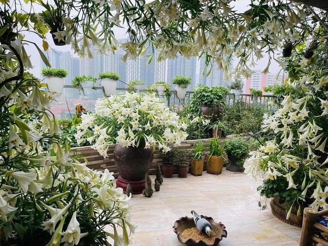 Hoa loa kèn vào mùa siêu rẻ, 'mãn nhãn' khu vườn nghìn bông của người phụ nữ Hà Nội ảnh 3