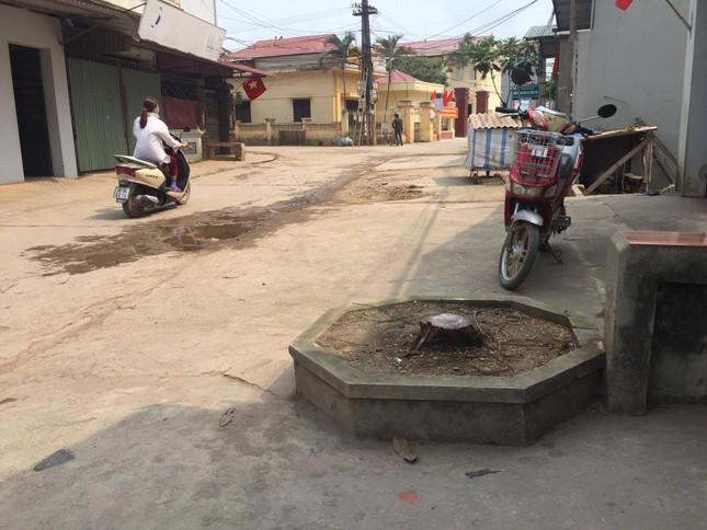 Đòi lại vỉa hè ở Hà Nội: Cây xanh có tội gì mà bị chặt? ảnh 3