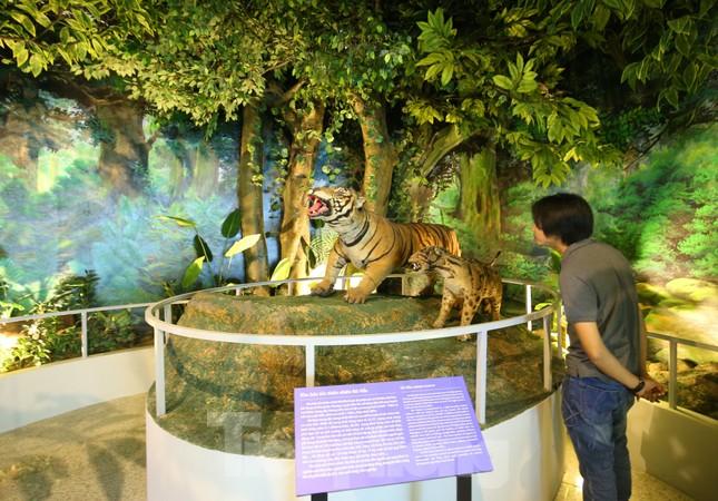 Thăm bảo tàng 'hoành tráng' vừa khánh thành chào mừng ĐH Đảng bộ tỉnh Yên Bái ảnh 4