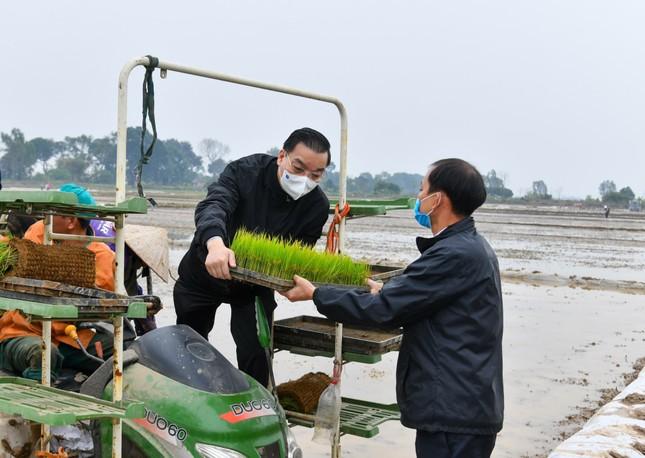Bí thư Vương Đình Huệ xuống đồng cấy lúa cùng nông dân ảnh 3