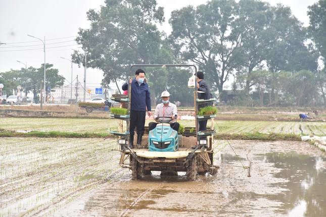 Bí thư Vương Đình Huệ xuống đồng cấy lúa cùng nông dân ảnh 5