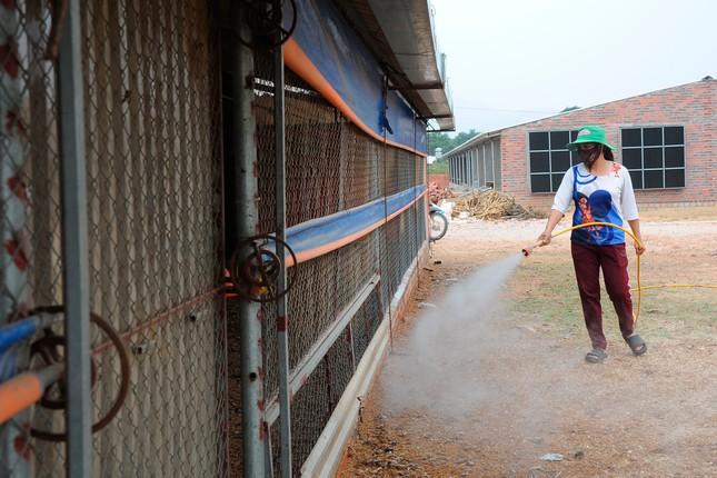 Hải Dương: Gà đồi Chí Linh gặp khó do COVID-19 ảnh 5
