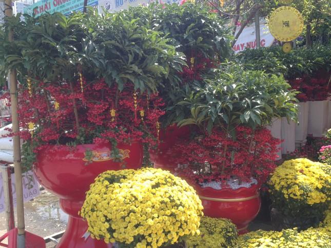 27 Tết, hoa xuân sớm giảm giá, xả hàng ảnh 6