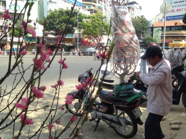 27 Tết, hoa xuân sớm giảm giá, xả hàng ảnh 9