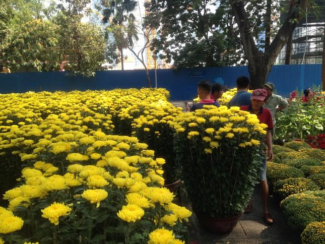 27 Tết, hoa xuân sớm giảm giá, xả hàng ảnh 2