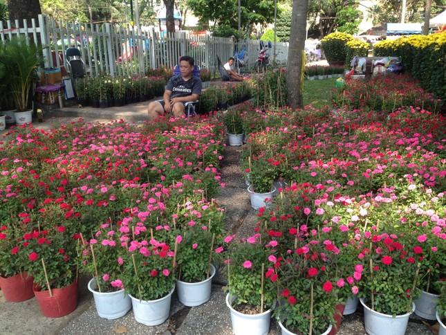 27 Tết, hoa xuân sớm giảm giá, xả hàng ảnh 13