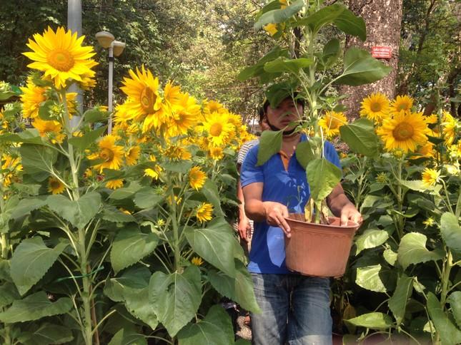 27 Tết, hoa xuân sớm giảm giá, xả hàng ảnh 1