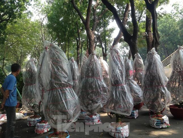 29 tết ở Sài Gòn: Đào bung sắc, sức mua rất chậm ảnh 2