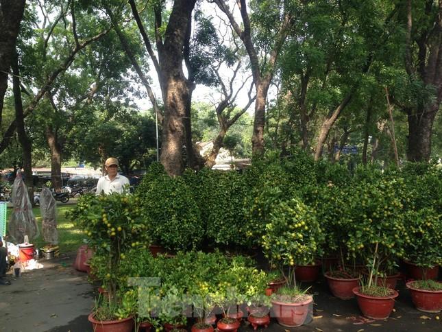 29 tết ở Sài Gòn: Đào bung sắc, sức mua rất chậm ảnh 6