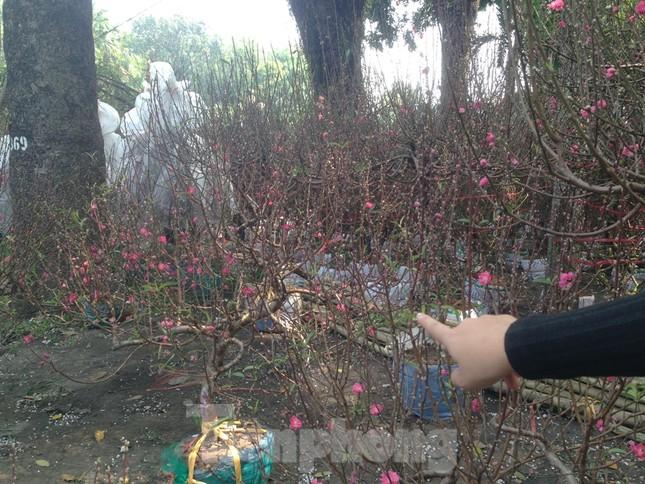 29 tết ở Sài Gòn: Đào bung sắc, sức mua rất chậm ảnh 4