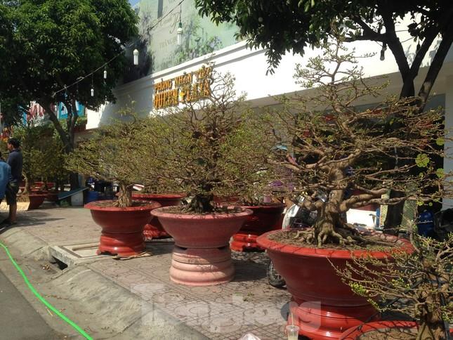 29 tết ở Sài Gòn: Đào bung sắc, sức mua rất chậm ảnh 11