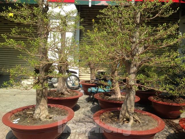 29 tết ở Sài Gòn: Đào bung sắc, sức mua rất chậm ảnh 12