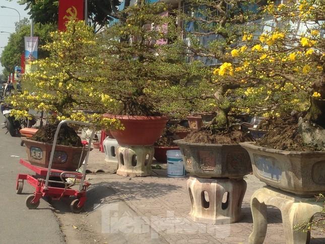 29 tết ở Sài Gòn: Đào bung sắc, sức mua rất chậm ảnh 14
