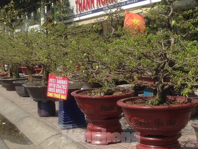 29 tết ở Sài Gòn: Đào bung sắc, sức mua rất chậm ảnh 13