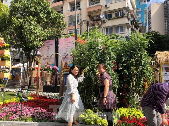 Vì sao tiểu cảnh ở phố đi bộ Nguyễn Huệ tả tơi ảnh 28