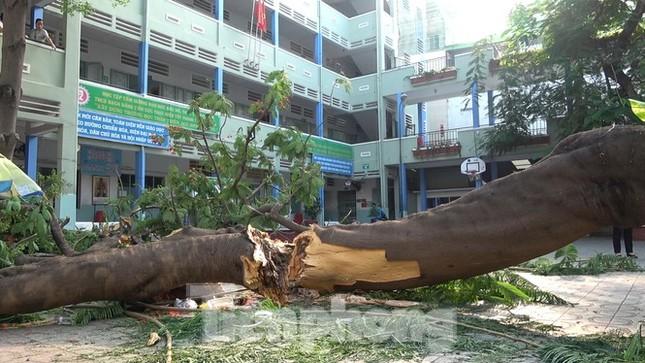 Sức khỏe 2 học sinh bị thương nặng nhất vụ cây đổ trong trường hiện thế nào? ảnh 2