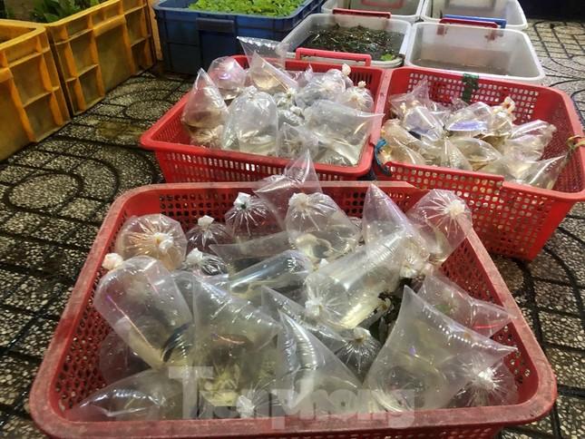 Tối muộn, người TPHCM tranh thủ mua cá chép cúng ông Táo ảnh 7