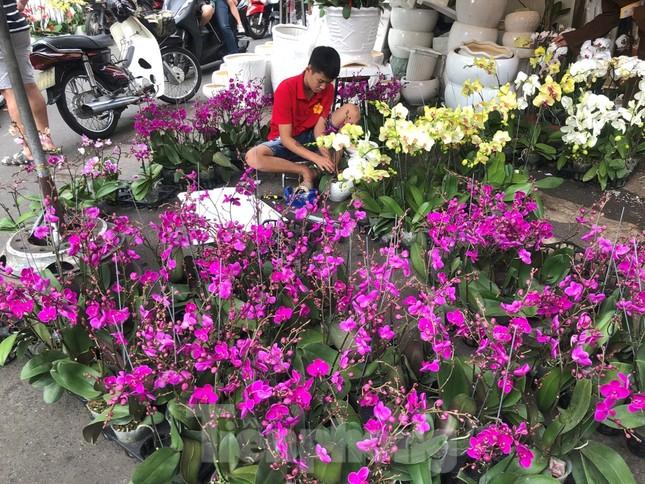 TPHCM: Chợ hoa Hồ Thị Kỷ 'xả hàng' kéo khách ảnh 12