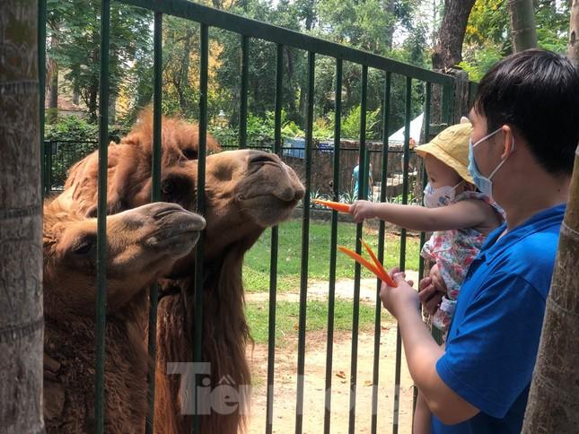 Du khách thích mê khi được vào chuồng ôm thú cho ăn ảnh 8