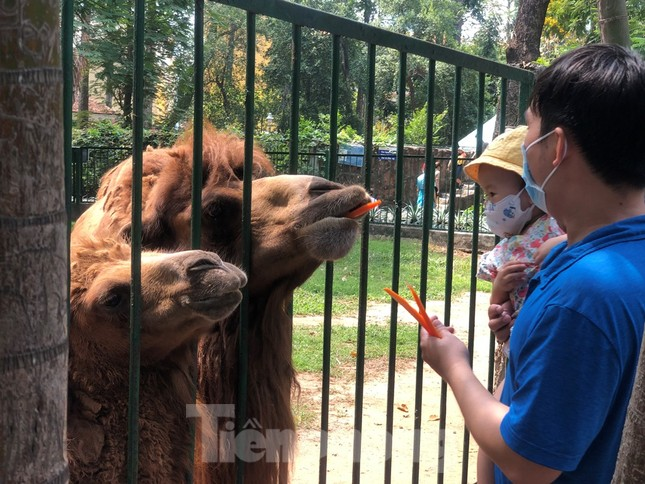 Du khách thích mê khi được vào chuồng ôm thú cho ăn ảnh 11