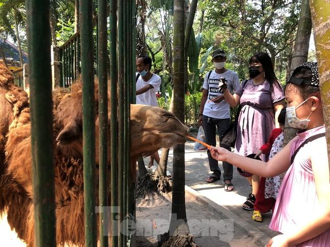 Du khách thích mê khi được vào chuồng ôm thú cho ăn ảnh 9