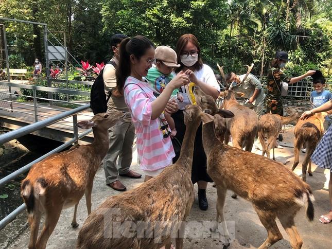 Du khách thích mê khi được vào chuồng ôm thú cho ăn ảnh 7