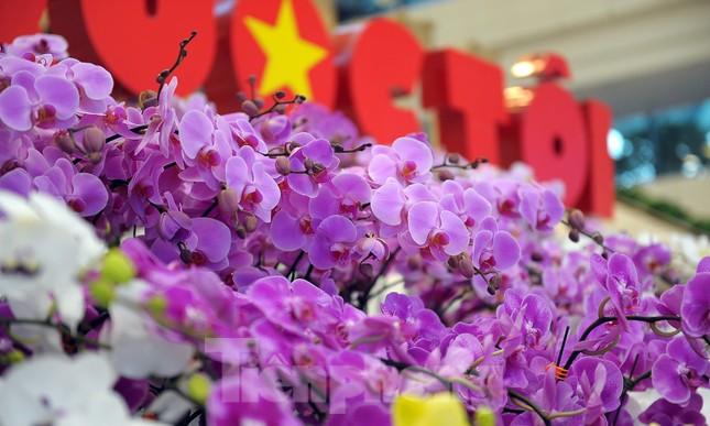 1.200 cành lan khoe sắc không gian Đại hội Hội LHTN Việt Nam lần thứ VIII ảnh 4