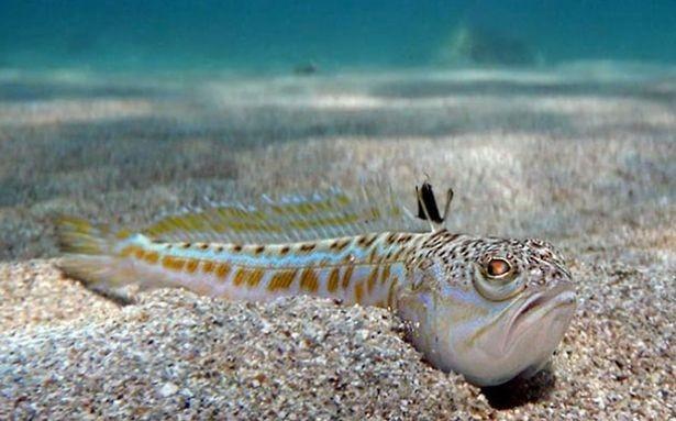 """Tin """"sốc"""": Cậu bé 16 tuổi chết ngay lập tức chỉ vì chạm vào con cá kỳ lạ khi đang lặn biển ảnh 8"""