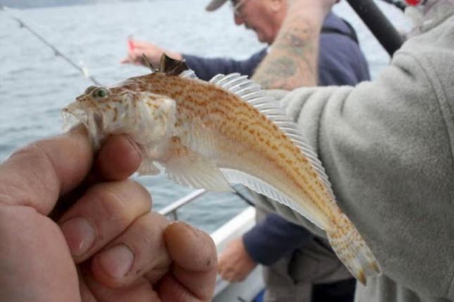 """Tin """"sốc"""": Cậu bé 16 tuổi chết ngay lập tức chỉ vì chạm vào con cá kỳ lạ khi đang lặn biển ảnh 6"""