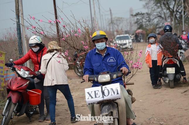 Những cành đào cuối cùng ở Nhật Tân xuống phố cận Tết Tân Sửu ảnh 10