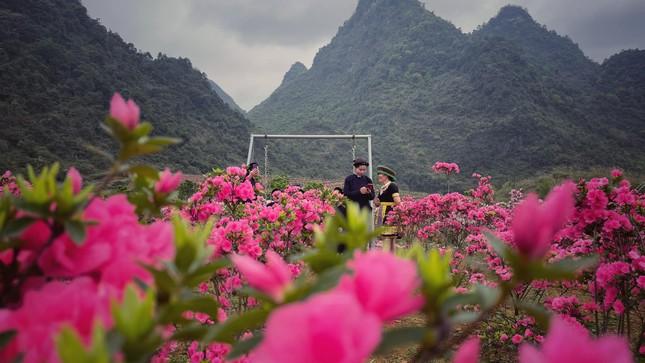 Lạc vào thiên đường hoa đỗ quyên lớn nhất Việt Nam ảnh 10