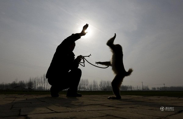 Đột nhập lò huấn luyện 'Tôn Ngộ Không' ở Trung Quốc ảnh 3